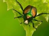¿Cómo afecta el cambio climático a los insectos?