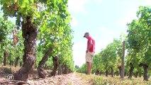 Le journal - 05/08/2019 - Sécheresse : les viticulteurs pas malheureux