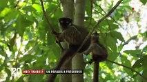 Madagascar : Nosy Tanikely, un paradis à préserver