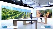 Vaucluse : des vignobles touchés durement par la sécheresse