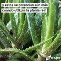 Consejos para aprovechar las vitaminas del Aloe Vera en las rutinas de belleza