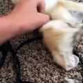 Un mignon bébé renard très joyeux qui sait comment le montrer. A voir !