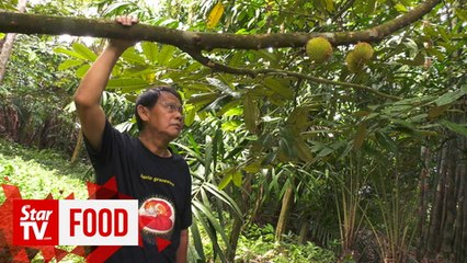DURIAN ADVENTURE: For the love of durian, Dr Abdul Aziz keeps going at 73