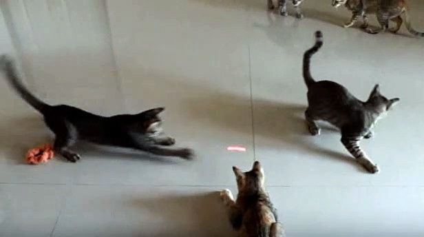 The kittens plays with laser light || Funny Kitten's Videos for Kids || Nature is Amazing || Viral Videos