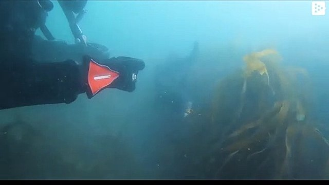British woman saves a shark caught in a fishing line in England
