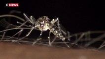 Le moustique tigre s'implante en France