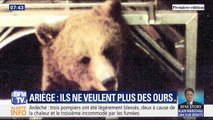 Une centaine de maires de l'Ariège réclament la disparition de l'ours dans les Pyrénées