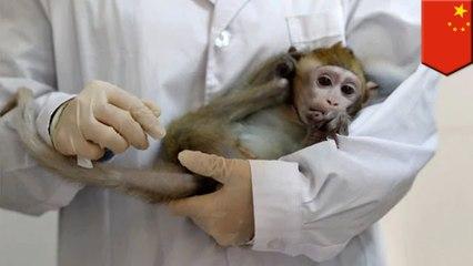 '중국 과학자들, 원숭이에 인간뇌세포 주입'외 3개
