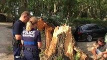 Vidéo : un arbre d'une dizaine de mètres tombe sur une voiture dans un camping à Avignon