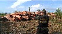 La déforestation de la forêt amazonienne atteint des records
