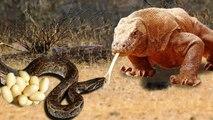 Amazing King Cobra Fight Lizard Dragon Komodo Hunting  - Snake vs Lizard The Reptiles of the Desert