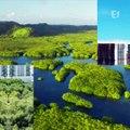 Les forêts du Brésil sont en train d'être coupées à grande vitesse !