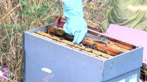 Sécheresse : Les apiculteurs inquiets pour leurs abeilles