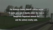 Monday Memories 6 Exotic Cats Rescued in Kansas