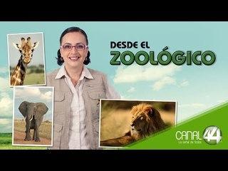 Desde el Zoológico: Capacitación de cuidadores