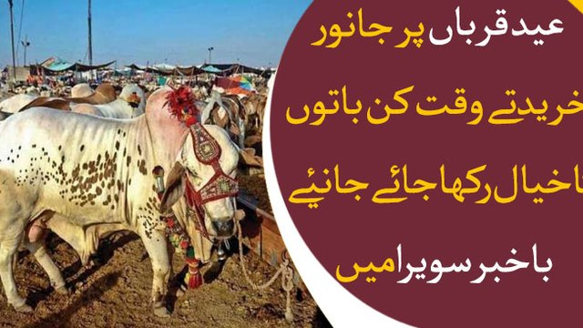 How to buy a perfect healthy sacrificial animal for Eid Ul Adha