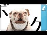Game of Thrones Opening Sung by Dog