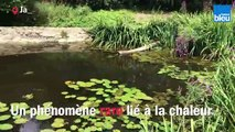 Des méduses_dans_le_Poitou