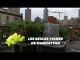 Ce vigneron fait pousser des vignes depuis son rooftop à Manhattan
