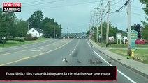 Etats-Unis : des canards bloquent la circulation sur une route (vidéo)