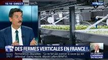 Les fermes verticales arrivent en France !