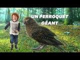 Des fossiles de perroquets géants découverts en Nouvelle-Zélande
