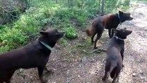 Incroyable : ces 3 chiens sont parfaitement immobiles !