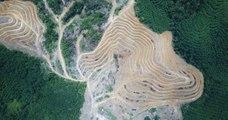 En juillet, la déforestation au Brésil a explosé par rapport à 2018