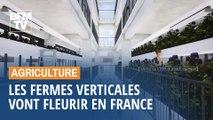 Les fermes verticales vont fleurir en France