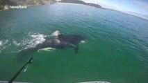 Une orque suit ces touristes pendant leur sortie en Paddle