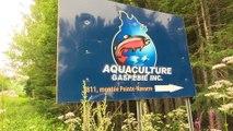 Du Bénin à Gaspé pour apprendre l'aquaculture