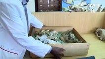 Kenya: sur les traces de Simbakubwa, dans le capharnaüm du musée de Nairobi