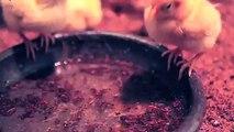 의성출장안마 -후불100%ョOiOV2671V8135{카톡AQ52} 의성전지역출장안마 의성오피걸 의성출장마사지 의성안마 의성출장마사지 의성콜걸샵◝⊎⻐
