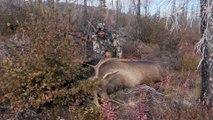 Alone: Breaking Down a Moose