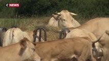 Sécheresse : le désarroi des agriculteurs