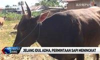 Tiga Hari Jelang Idul Adha, Permintaan Sapi di Gorontalo Meningkat