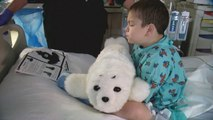 Therapeutic Robot Seal Brings Joy To Patients