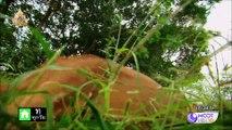 ชีวิตสัตว์มหัศจรรย์ : แมวป่าคาราคัล