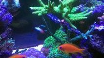 Aquarium récifal 500 litres