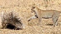 5 Apex Predators - Struggles of the Hunt - Full Documentary