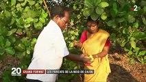 Inde : les petites mains de la noix de cajou
