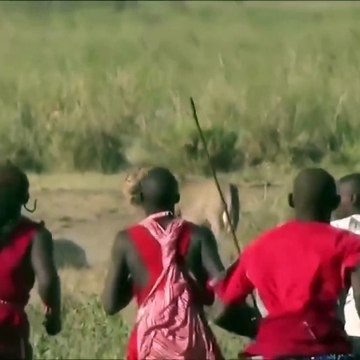 Amazing Wild Animals Attacks - Wild Animal Fights Caught On Camera - Wild Animals Ultimate Fights