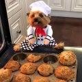 Qui a dit que les chiens savaient pas cuisiner. Admirez ce chef !