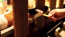 남양주출장안마 -후불1ØØ%ョØ1ØM2997M5327{카톡KC789} 남양주전지역출장마사지 남양주오피걸 남양주출장안마 남양주출장마사지 남양주출장안마 남양주출장콜걸샵안마 남양주출장아로마 남양주출장㌪㌷㌑