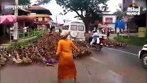सड़क पर अचानक आ गई बतखों की सुनामी