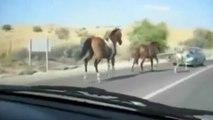 Accident entre un cheval et une voiture