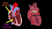 Heart Anatomy Song for Kids Anatomy for Kids///===//