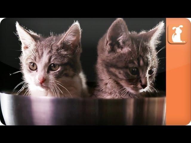 Kitten Bowl – Kittens in bowls