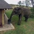 Incroyable ! On a filmé cet éléphant qui nettoyait un jardin. A voir !
