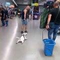 Quand ton chien est trop paresseux, voici ce qui arrive. Trop drôle !